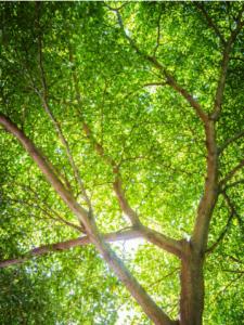 Tree Removal Laguna Niguel